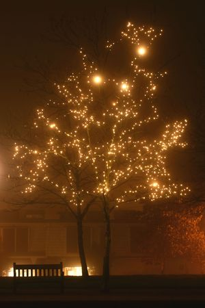 misty effect of fog on lights: holiday mini sets in trees, park andamp,amp, street lights Stock Photo