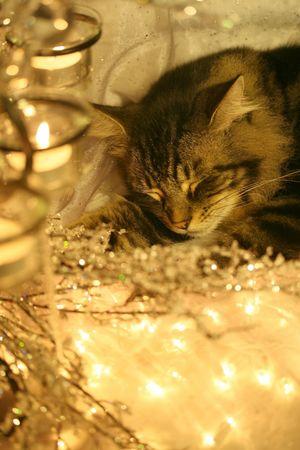 holiday photo shoot interloper: visions of sugar mice? Stock Photo - 1781104