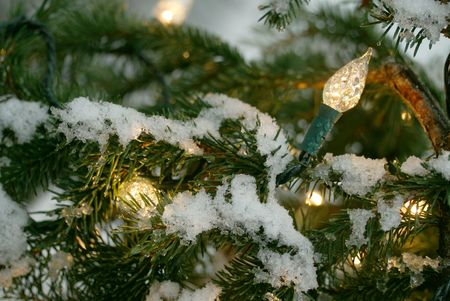 facet: wintry holiday background: snowy acrocona norway spruce tree branches and festive facet lights