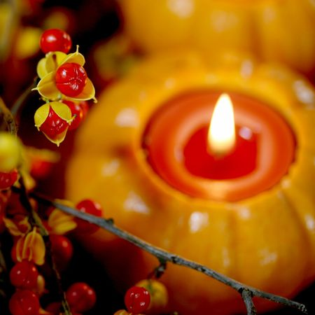 fresh autumn bittersweet vines with berries just popped, mini pumpkin with candle; shallow DOF   Stock Photo