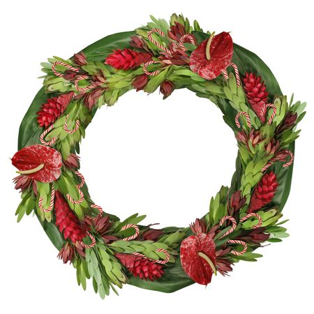 protea flower: tropical flower Christmas wreath Stock Photo