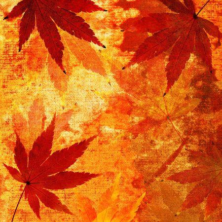 Japanese maple leaves; autumn grunge background photo