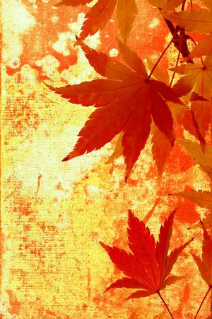 Japanese maple leaves; autumn grunge background
