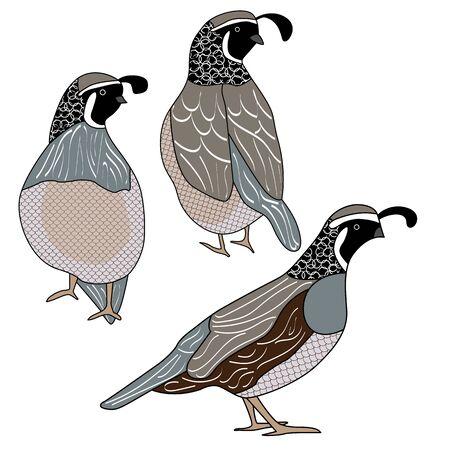 Wektor ptaki przepiórcze w czarny, brązowy, szary i biały zestaw ikon na białym tle. Clipart do ozdabiania kart, biuletynów, scrapbookingu.