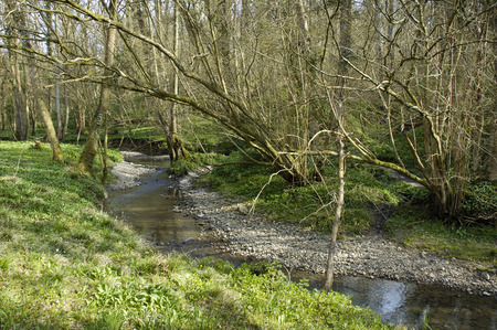 Little Avon river in Copiced Woodland Wetmoor, Lower Woods