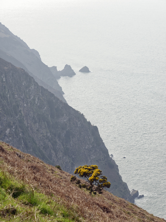The Mare & Colt rocks, Elwill Bay, Trentishoe, North Devon Coast  South West Coast Path Reklamní fotografie