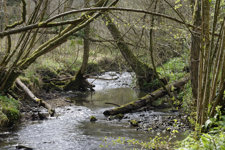 Little Avon River, Lower Woods Ancient Woodland, Gloucestershire, UK