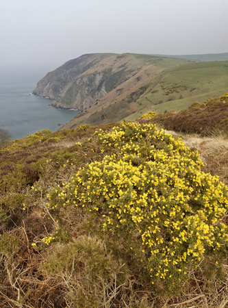 Elwill Bay, Trentishoe, North Devon Coast  South West Coast Path