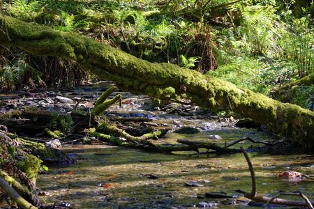 Woodland Stream, Borough Valley, Lee, North Devon, UK Stock Photo
