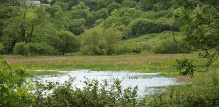 Water meadow with Ragged Robin - Lychnis flos