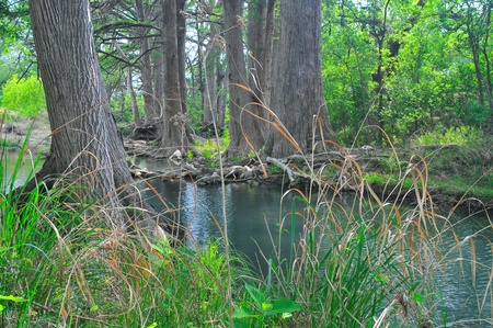 cypress trees along river, texas hill country photo