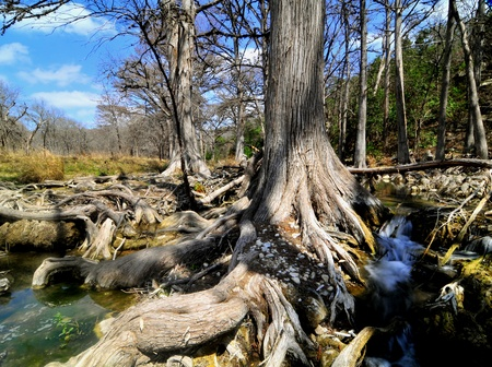 cypress trees and small waterfall, texas hill country