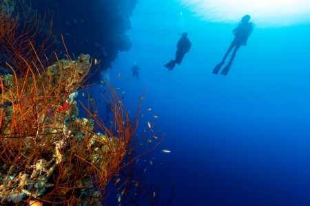 Silhouette of SCUBA divers on a deep reef wall with whip corals in the foreground photo