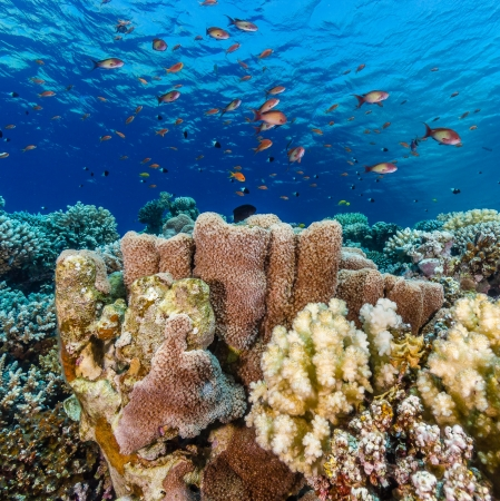 Soft and hard corals on a tropical coral reef in the Red Sea Stock Photo