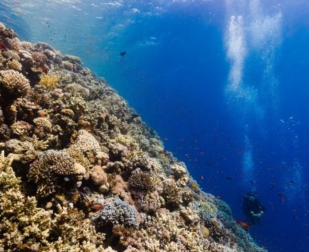 Distant scuba dives explore a hard coral ridge in the tropics