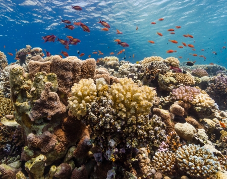 Hard and soft corals on a coral ridge in the Red Sea Stock Photo - 16881809