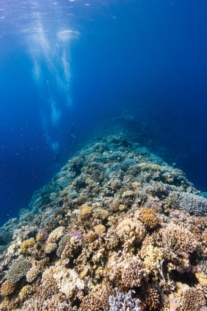 SCUBA divers explore a hard coral encrusted ridge in deep water on a tropical reef