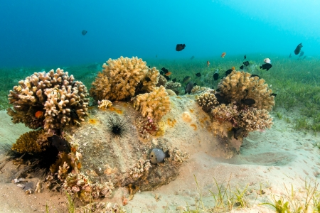 damselfish: An old barrel lying on the sea bed colonised by hard and soft corals Stock Photo