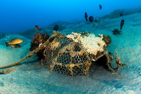 An old abandoned fish trap colonised by corals and tropical fish Stock Photo - 16881962