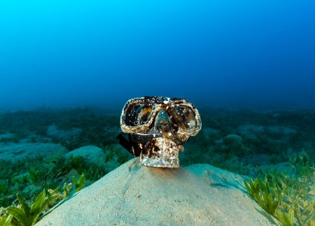 sea pollution: Plastic skill wearing a diving mask on the seabed on a gloomy afternoon