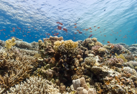 Vibrant hard and soft corals on a tropical reef