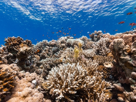 Vibrant hard and soft corals on a tropical reef Stock Photo - 16942116
