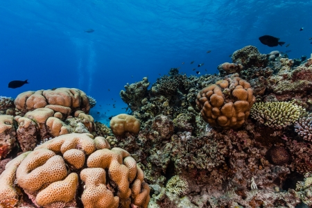 Hard and soft corals on a shallow tropical reef photo