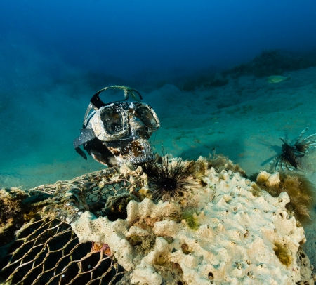 damselfish: A plastic skull with diving mask attached on top of an old underwater fish trap