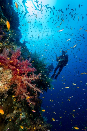Silhouette of a diver next to soft corals and tropical fish on a deep wall