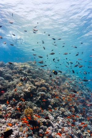 hard coral: Tropical fish swim around a hard coral reef Stock Photo