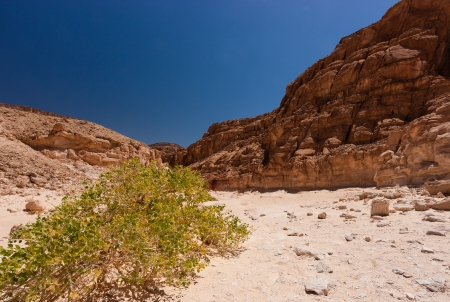 sinai: A single bush growing in a remote desert canyon Stock Photo