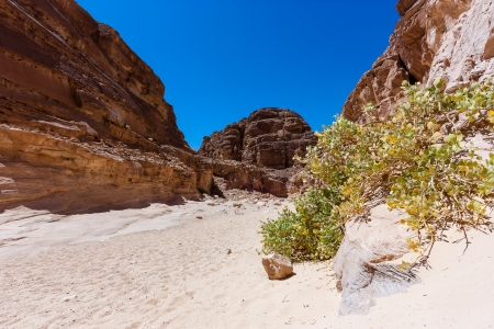 A lonely bush in a sandy desert canyon
