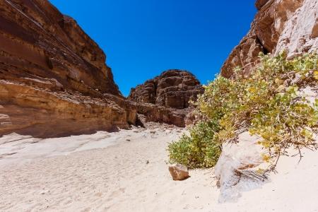 monte sinai: Un solitario monte en un desierto arenoso cañón