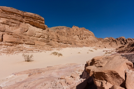 sinai: Desert fauna in a sandy remote canyon Stock Photo