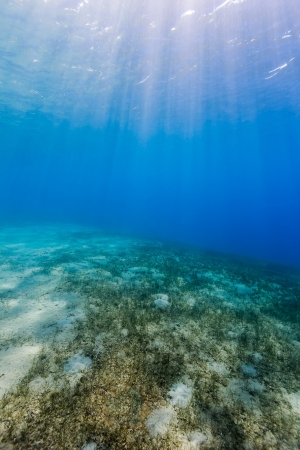 beneath the surface: Sun rays filter down from the surface onto a sand and sea grass bottom Stock Photo