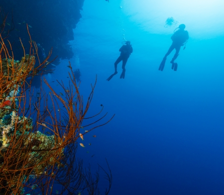 Silhouette of SCUBA divers next to a whip coral foreground on a deep coral reef wall photo