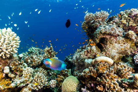 drab: Tropical fish and corals on a coral reef Stock Photo