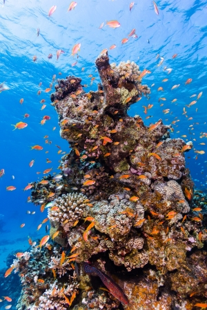 reefscape: Tropical fish swim around a hard coral pinnacle Stock Photo