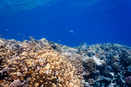 Tropical fish and hard porite corals in shallow water photo