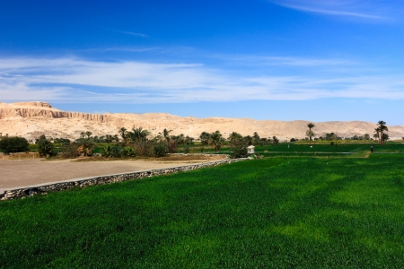 Green crops give way to sandy desert in the city of Luxor  The ancient Hatshepsut Temple visible in the background Stock Photo