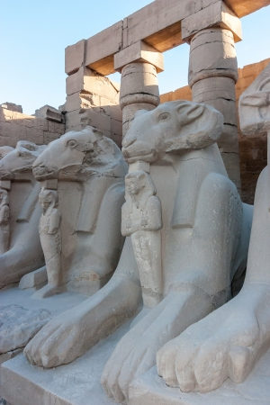 past civilizations: Several Sphinx and other statues in the late afternoon at the Karnak Temple, Luxor