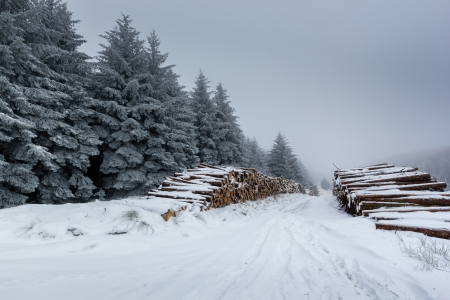 Snow covered logs and fur trees on a cold, foggy winter day