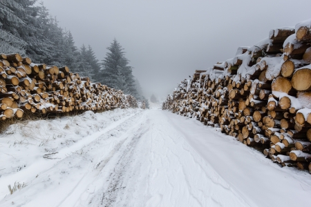 Snow covered logs line a remote snowy tack Stock Photo - 17462787