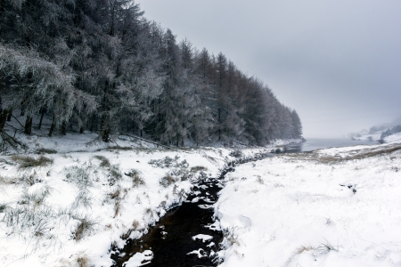 A small stream flows past fur trees on a snow covered landscape towards a lake