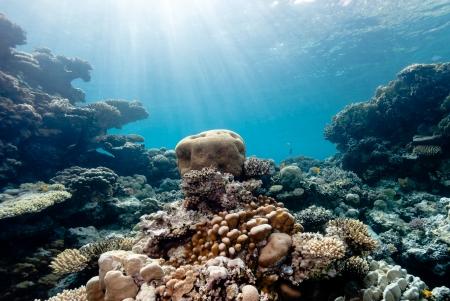 Sun beams filter down illuminating a small brain coral