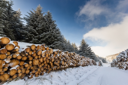 Snow covered logs and trees in a winter landscape