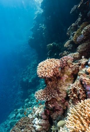 hard coral: Sunbeams illuminate hard corals on a tropical reef Stock Photo