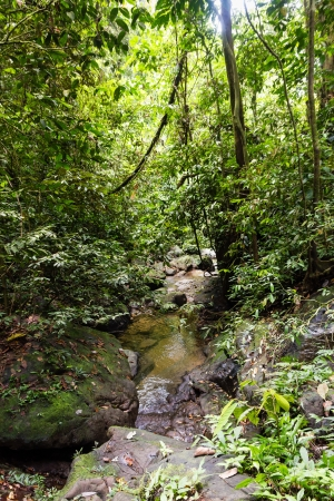 A small stream in a tropical jungle photo