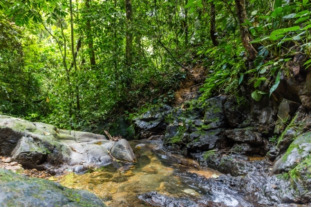 A small stream in the rainforest photo