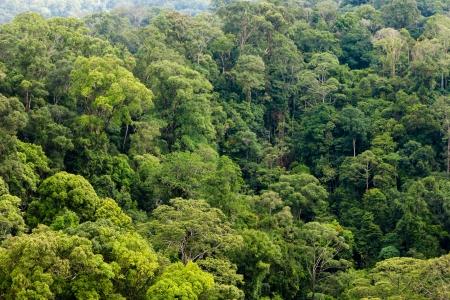 열대 우림 캐노피의 Treetrops
